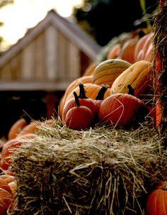 Pumpkins on a straw bale