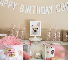 French bulldog's 1st birthday party, themed pink party, Minneapolis photographer minneapolis photography
