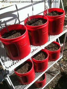 Seedling Starting Station Using Empty Plastic Coffee Containers / One Ash Homestead Plastic Coffee Cans, Plastic Coffee Containers, Reuse Containers, Plastic Buckets, Plastic Bottles, Container Gardening, Gardening Tips, Flower Gardening, Coffee Can Crafts