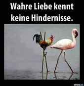 wahre liebe You are in the right place about funny photo hilarious guys Here we offer you the most b Word Pictures, Animal Pictures, Funny Pictures, Funny Photos Of People, Funny People, Funny Cute, Hilarious, Tierischer Humor, Funny Couples