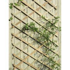 Nature hardhouten klimrek 30x180 cm | Bloemen, planten & potten | Tuininrichting | Tuin | GAMMA