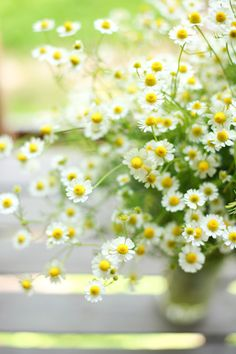 chamomile, so pretty and smell heavenly in the herb garden; they're easy to grow from seed and naturalize well if you leave the second batch of flowers (after harvesting for tea, etc) to wilt and go to seed