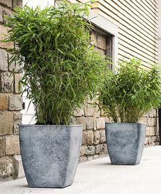 Bambus 'Boo' | Planter | Bakker