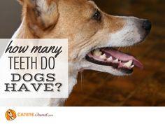 Sad Dog Stories, Happy Dogs, Teeth, Corgi, Funny, Animals, Corgis, Animales, Animaux