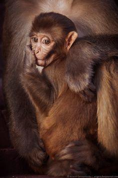 Sacred Monkey baby portrait by Arsenii Gerasymenko on 500px