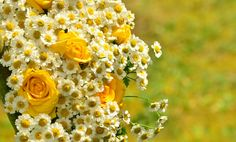 Gula rosor och daisy