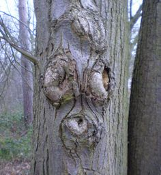 Tree Faces from Woodland Trust.  Look for tree faces in your neighborhood or local park on a fall hike!
