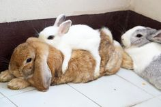 Rabbits: no understanding about personal space