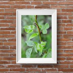"""Vines and thorns 