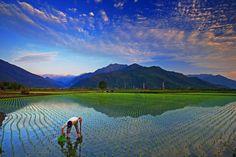 rice fields, Taitung, East Taiwan