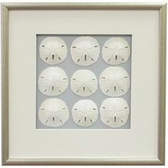 """Featuring rows of sand dollars against a solid background, this framed and matted wall decor brings coastal-chic style to your entryway or breakfast nook. Product: Framed wall decorConstruction Material: Wood, glass and sea lifeColor: Burnished silver frameDimensions: 17.5"""" H x 17.5"""" WCleaning and Care: Wipe with dry cloth"""