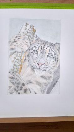 the beautiful snow leopard in colour pencil