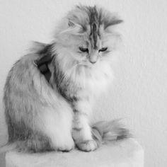 My Cat ♡♡♡