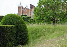 #Yew #hedge at #Hatfield #House