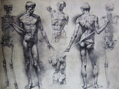 Figure Drawing Models How to draw models from life Human Body Drawing, Human Body Art, Human Figure Drawing, Figure Drawing Reference, Guy Drawing, Anatomy Reference, Life Drawing, Drawing Ideas, Anatomy Sketches