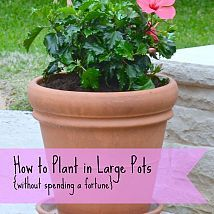 Hometalk :: #gardening #containergardens I have a large yard that I like to fill…