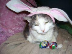 Easter bnuny kitty