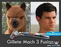 ImageFind images and videos about funny, lol and Taylor Lautner on We Heart It - the app to get lost in what you love. Taylor Lautner, Haha Funny, Funny Jokes, Funny Stuff, Funny Things, Funny Shit, Funniest Things, That's Hilarious, Freaking Hilarious