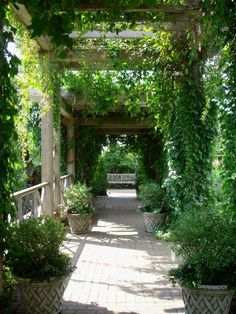 Pergola – A Perfect Addition to Your Garden!