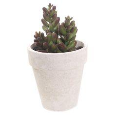 Sonoran Highlands Mini Jade Succulent Desk Top Plant in Pot (Set of 6)
