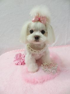 Lizzie keeps her hair in the Tassle top style. She prefers a low maintenance style. She has her hair done by Suzanne, www.poodlepenthouse.com
