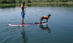 stand up paddle board - Google Search
