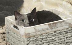 Seltenes Kätzchen wächst zu Schönheit heran