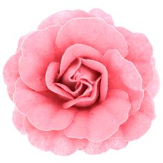 Pink Fabric Layered Corsage Rose Flower Brooch  Hair Fascinator  Accessory