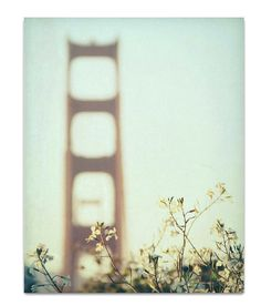 photography, san francisco photography - Golden Afternoon, 16x20 fine art metallic photograph