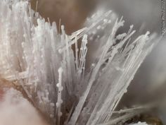 Bultfonteinite aciculaire avec globule d'un minéral non identifié. N`chwanning Mine, Kuruman, South Africa FOV=1.7 mm Photo Florian Wrobel