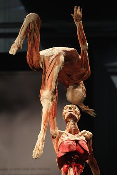 Plastinated human corpses posed to look like figure skaters stand on display at the Body Worlds exhibition on April 26, 2011 in Berlin, Germany. The exhibition, which features human and animal corpses plastinated by Gunther von Hagens, focuses on the role of the heart. It will be open to the public at the Postbahnhof from April 27 to August 14.