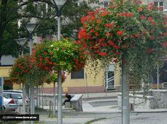 hanging planter for city lanterns Jiflor Atech Urban Nature, Flower Boxes, Hanging Planters, Lanterns, Cities, Lamps, Beautiful, Decor, Flowers