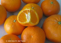 Tangerines ~ I think this is the end of the season for tangerines ~ mid-March ~ from the Farmers' Market today.  Photo © 2014 Ann M. Del Tredici