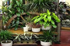 How much light do houseplants need in order to grow and thrive? Probably more than you're providing. The limited number of houseplants tha.