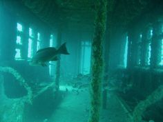Fish inside an old subway car, now a part of the Bill Perry Reef system off the coast of Myrtle Beach, SC.