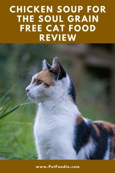 Healthy Cat Food, Grain Free Cat Food, Soup For The Soul, Legumes Recipe, Dessert Cookbooks, Food Industry, Chicken Soup, Food Allergies, Natural Flavors