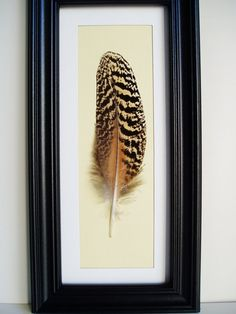 framed feather -  I could do this with my pheasant feather