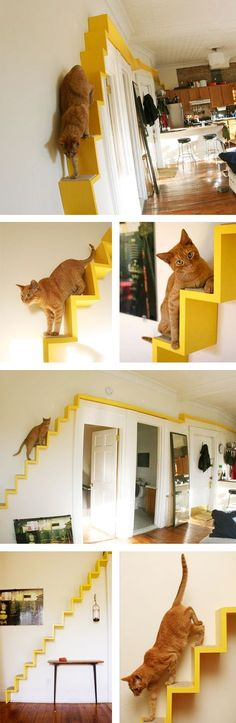 my cats would love these cat shelves! cat furniture for your walls. YES! Cat Shelves, Shelf Desk, Wood Shelf, Wood Desk, Cat Room, Built In Desk, Cat Furniture, Furniture Covers, Painting Furniture