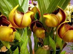 Картинки по запросу orquideas raras e exoticas