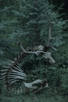 34 Ideas For Photography Dark Creepy Gothic Monster Falls, Half Elf, Arte Obscura, 3d Fantasy, Dark Fantasy, Southern Gothic, Dark Forest, Faeries, Crane