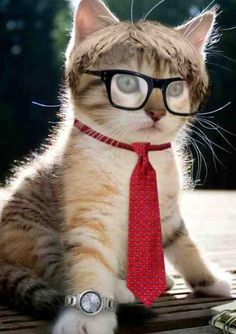 TAKE A LOOK AT THIS TOP CAT........HE IS NOW #1 AND 20/20 (OR SO SAID HIS OCULIST).............ccp