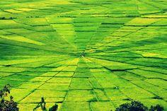 Resembling Exotic scenery Beautiful Park, But Turns Rice