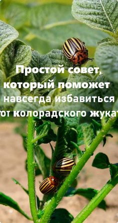 Farm Gardens, Diet And Nutrition, Life Hacks, Plant Leaves, Home And Garden, Soda, Flowers, Plants, Beverage
