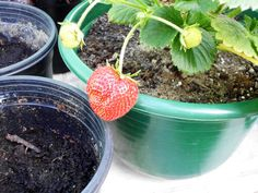 Uma horta em vasos