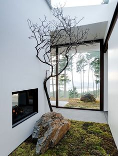 bringing nature indoors