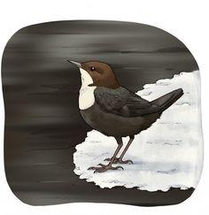 Talviseurannan lajit Bird, Painting, Animals, Animales, Animaux, Painting Art, Paintings, Paint, Draw