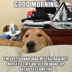 Im just gonna wag my tail against noisy stuff until you wake up because I love you