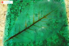 Color-Tinted Skeleton Leaves