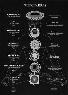 The Chakras.Chakras are Energy Vortices, or intersections where two or more Nadis meet. Nadis are located in the Astral Body and carry the Prana. Generally they correspond with the nerves of the Physical Body. There are three main Nadis that correspond with the spine and which concern us in the practices of Kundalini and Hatha Yoga. These are the: Ida, Pingala and Sushumna.Everyplace the 72,000 Nadis of the Astral Body intersect, there is a Chakra. There are an uncounted number of Chakras…