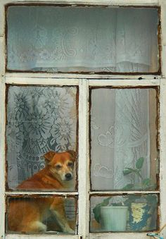 Puppy in the Window by Marina Budaeva - Pixdaus